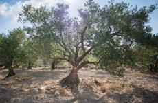 icam-olivier-tamari